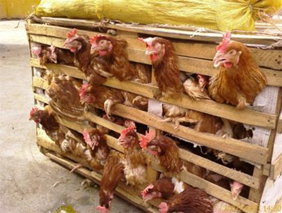 Xử lý dứt điểm tình trạng nhập lậu thực phẩm bẩn