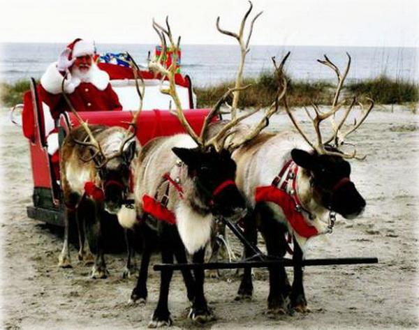 Tuần Lộc của Ông già Noel có thật hay không?