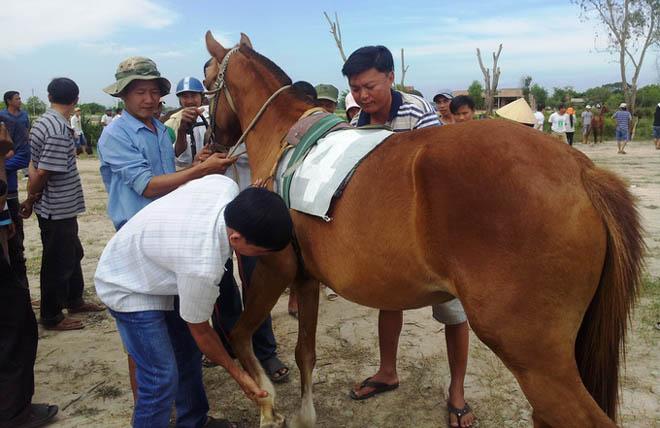 Năm Giáp Ngọ về thăm làng nuôi ngựa Đức Hòa