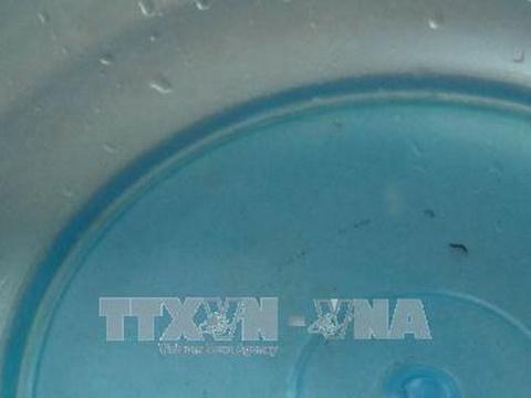 Đã có kết luận về 'sinh vật lạ' trong nước sinh hoạt tại Ninh Bình