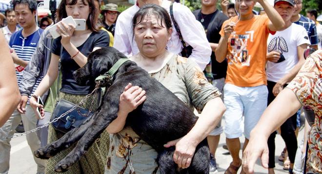 Nộp tiền chuộc để cứu chó khỏi bị ăn thịt trong lễ hội 'giải đen'