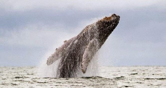 Tuyển Anh sẽ được đi ngắm cá voi miễn phí ở Iceland nếu... thua ở vòng 1/8