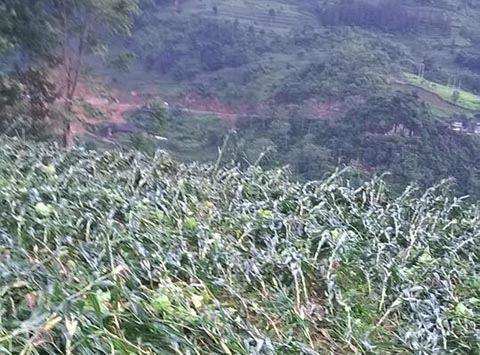 Lào Cai: 2 người chết, 3 người bị thương do giông lốc và sét đánh