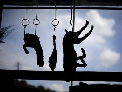 KINH HOÀNG hàng Trung Quốc: Giết chó mèo lấy da, giả làm da cừu