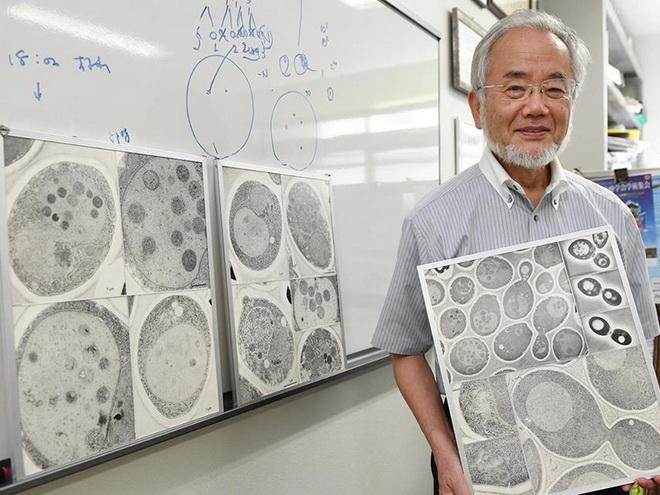 Giải Nobel Y học 2016: Có ý nghĩa gì trong chống ung thư?