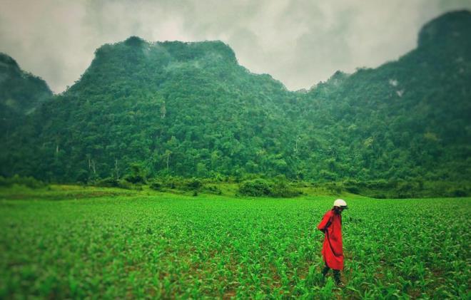 Đoàn làm phim 'Kong: Skull Island' tiết lộ lý do chọn Việt Nam làm bối cảnh