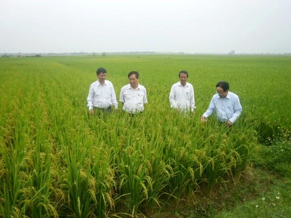 Xu hướng tiêu dùng sản phẩm nông nghiệp hữu cơ