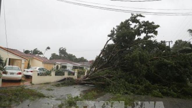 Siêu bão Irma quét qua Florida, 6 triệu người phải sơ tán