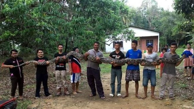 7 người đàn ông hợp sức 'giải cứu' con trăn khổng lồ khỏi giếng