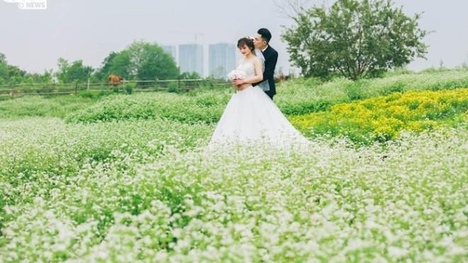 Ngỡ ngàng vườn tam giác mạch trái mùa đẹp ngây ngất giữa Hà Nội, giới trẻ tha hồ check-in