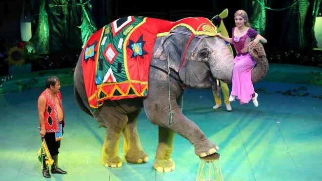 Xung quanh khuyến nghị của AFA về xiếc thú (kỳ 2): Những 'nghệ sĩ động vật' được đối đãi thế nào?