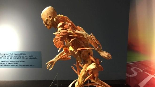 Triển lãm 'Sự bí ẩn đặc biệt của cơ thể người': Những dư luận trái chiều