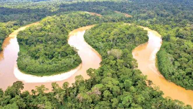Cảnh báo tình trạng phá rừng rậm Amazon tại Brazil