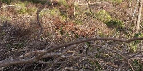 Gia Lai khởi tố vụ án hình sự về vụ phá rừng huyện Krông Pa