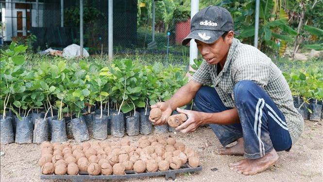 Ứng dụng 'bom hạt giống' tái tạo hệ thực vật vùng khô hạn