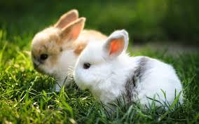 Truyện cười bốn phương: Con thỏ kỳ lạ