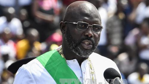Tổng thống Liberia làm việc tại nhà sau khi phát hiện rắn độc tại nhiệm sở