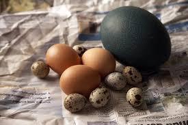 Truyện cười bốn phương: Quả trứng kỳ lạ