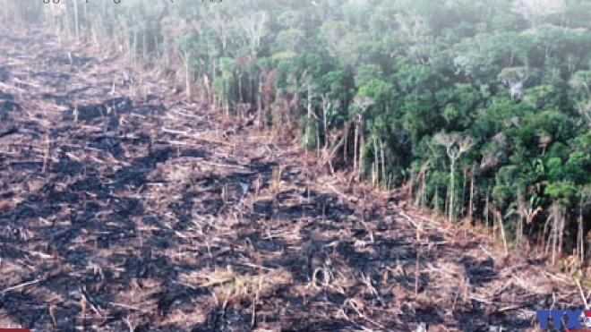 Diện tích rừng Amazon đã bị phá hủy