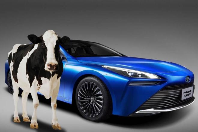 Người Nhật đang chế tạo ô tô chạy bằng… phân bò