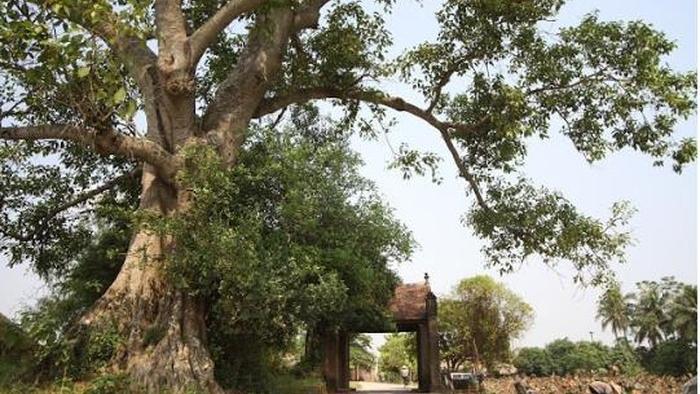 Hà Nội hỗ trợ người dân Làng cổ Đường Lâm làm du lịch