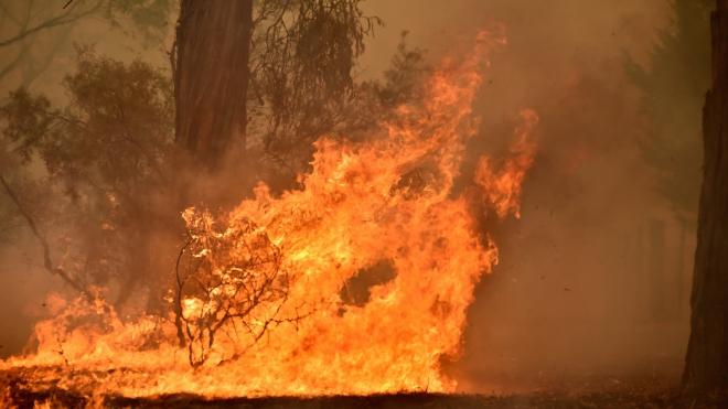 Australia: Hàng chục nghìn người sơ tán trước nguy cơ cháy rừng lan rộng