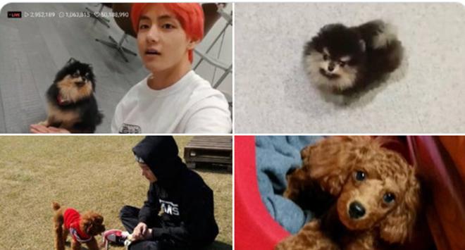 BTS, Bts, BTS tin giật gân, Jungkook, RM BTS, Jimin, Suga, V BTS, Jin, Dispatch, bts