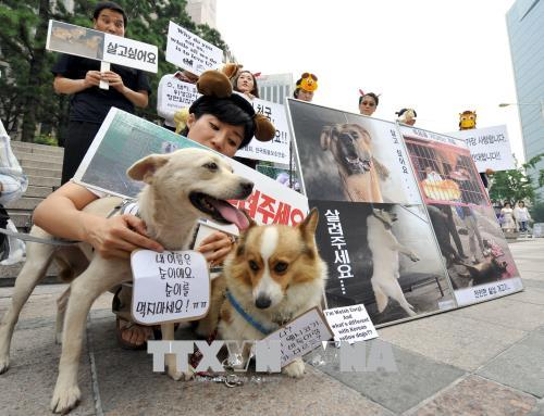 Các nhà hoạt động Hàn Quốc tuần hành kêu gọi bảo vệ động vật và phản đối việc ăn thịt chó tại Seoul. Ảnh: AFP/TTXVN