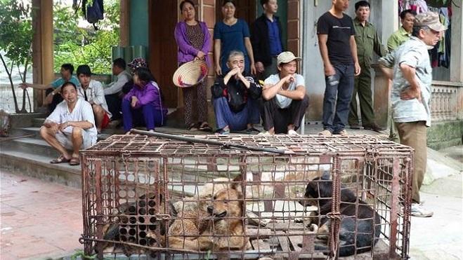 Vụ cháu bé bị chó cắn tử vong ở Hưng Yên: Giao đàn chó về cơ quan công an