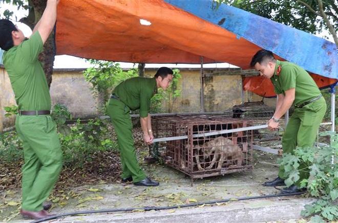 Trong ảnh: Đàn chó được chuyển tới Công an huyện Kim Động. Ảnh: Đinh Tuấn - TTXVN