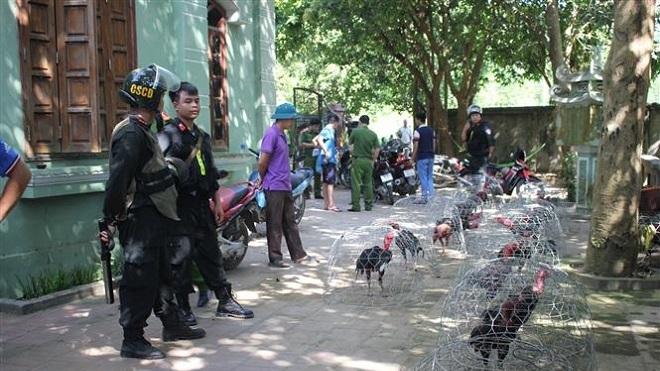 Hòa Bình: Bắt giữ 66 đối tượng đá gà ăn tiền với quy mô lớn