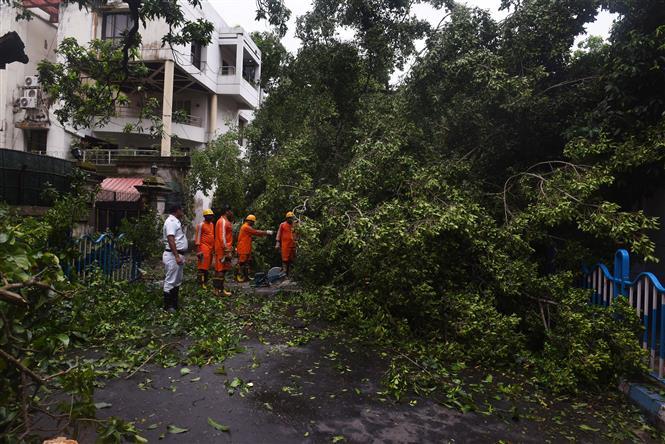 Trong ảnh: Cây cối bị quật đổ sau bão Amphan tại bang Kolkata, Ấn Độ ngày 21/5/2020. Ảnh: THX/TTXVN