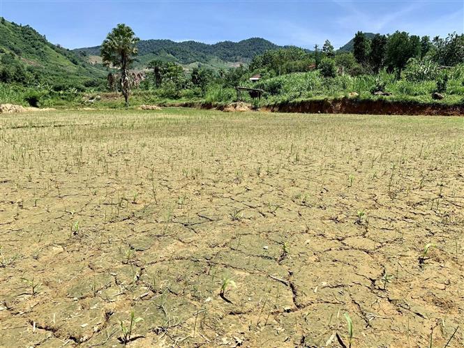 Trong ảnh: Đồng ruộng nứt nẻ vì nắng hạn, thiếu nước tại xã Hương Hữu, huyện Nam Đông, tỉnh Thừa Thiên - Huế. Ảnh: Mai Trang-TTXVN