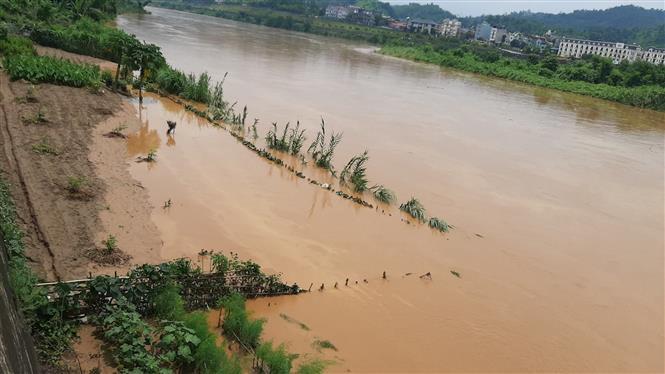 Trong ảnh: Lũ trên sông Hồng dâng cao gây ngập lụt nhiều diện tích hoa màu của người dân. Ảnh: Hồng Ninh - TTXVN