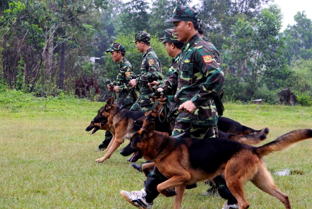 Các chiến sỹ biên phòng Thừa Thiên-Huế huấn luyện chó nghiệp vụ trên thao trường. (Ảnh: Hồ Cầu/TTXVN)