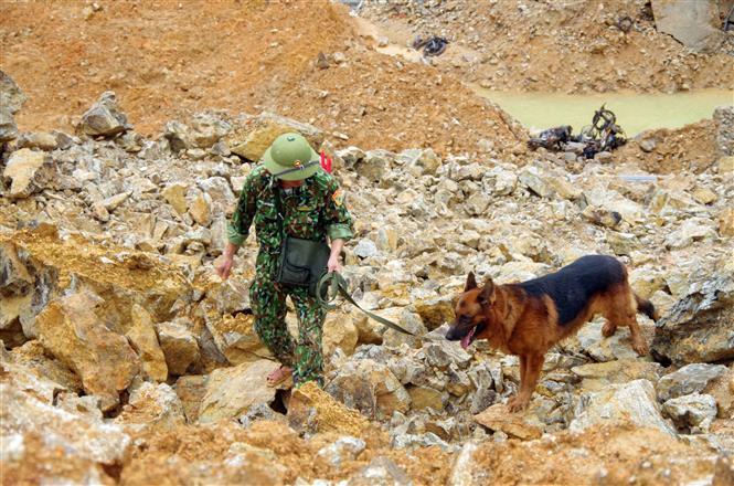Chó nghiệp vụ tham gia tìm kiếm những nạn nhân mất tích tại Thủy điện Rào Trăng 3. Ảnh: TTXVN phát.