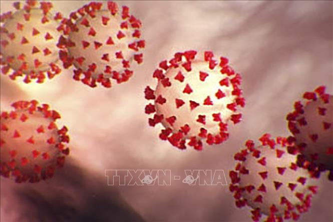 Các nhà khoa học Australia đã phát triển một công cụ mới giúp tháo gỡ vấn đề đột biến gene ở virus SARS-CoV-2. Ảnh: TTXVN