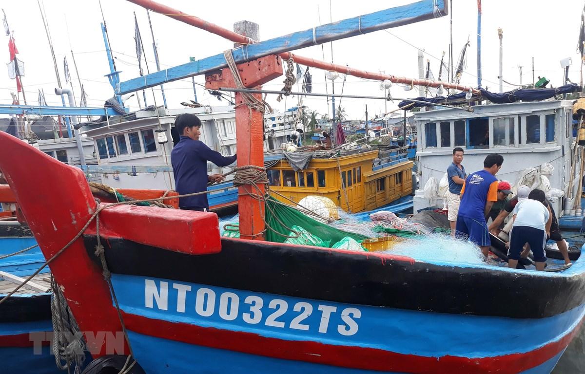 Tàu thuyền neo đậu tránh bão
