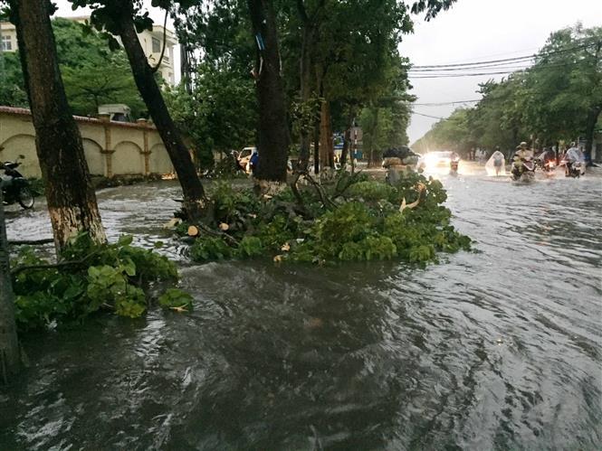 Một số tuyến đường ngập sâu và cây bật gốc gây nguy hiểm cho người tham gia giao thông. Ảnh: Nguyễn Oanh-TTXVN