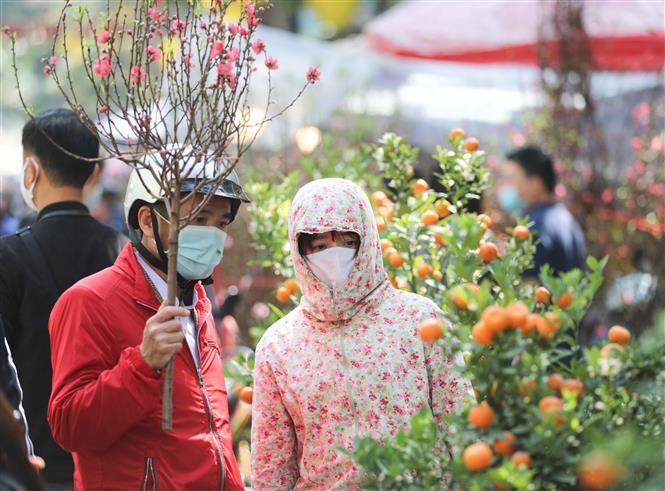 Người dân chọn mua cây quất về chơi Tết cùng với cành đào truyền thống. Ảnh: Thanh Tùng - TTXVN