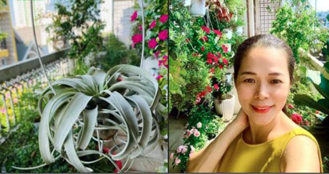 Ca sĩ Mỹ Lệ khoe vườn hoa không cần chăm, không cần tưới mà vẫn tươi quanh năm của nhà mình