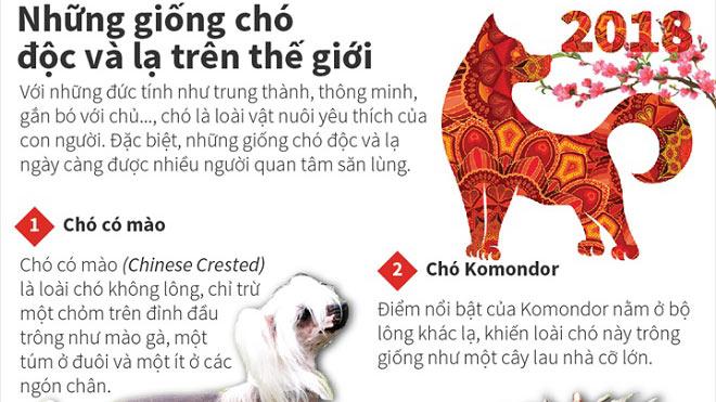 Top 10 giống chó 'độc và lạ' trên thế giới: Bạn đã thử tìm nuôi?