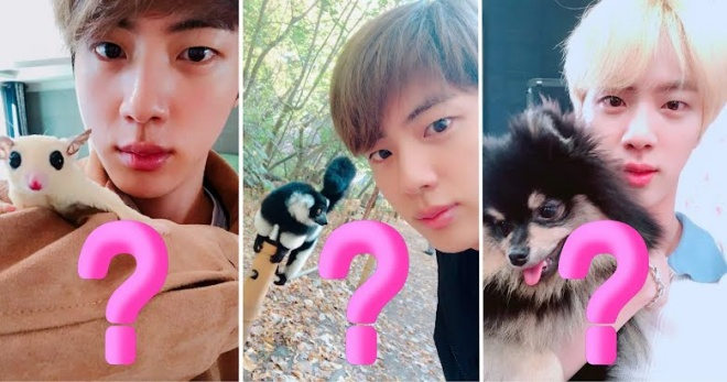 BTS, BTS tin tức, BTS thành viên, Kpop, ARMY, BTS jin, Jin, Jin BTS, BTS idol, BTS profile, BTS pet, BTS thú cưng, BTS youtube, BTS twitter, BTS interview, BTS Weverse