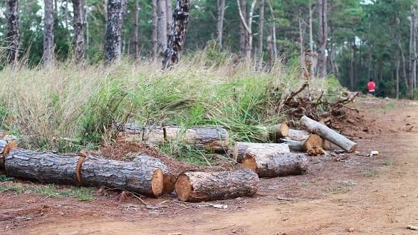 Khởi tố, bắt tạm giam công an viên nhận tiền để 'cho phép' phá rừng