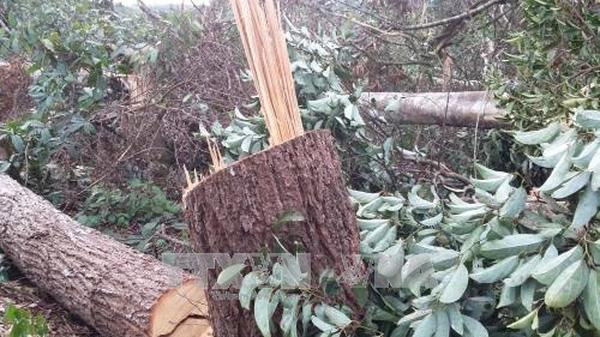 Vụ phá rừng ở Đắk Nông: Khiển trách Chủ tịch Hội đồng Quản trị Công ty Lâm nghiệp Quảng Sơn