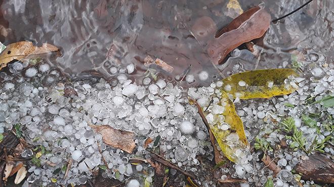 Điện Biên: Mưa đá bằng đầu ngón tay tại huyện Mường Nhé
