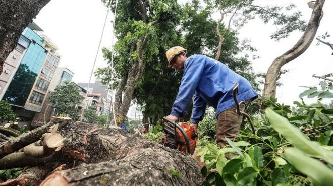VIDEO: Hà Nội chặt hạ 130 cây xanh từ hồ Thủ Lệ đến Núi Trúc