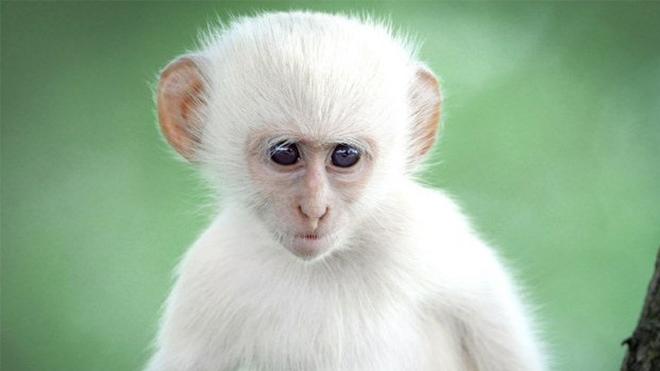 Điện Biên bác thông tin 'khỉ trắng báo oán' trên địa bàn