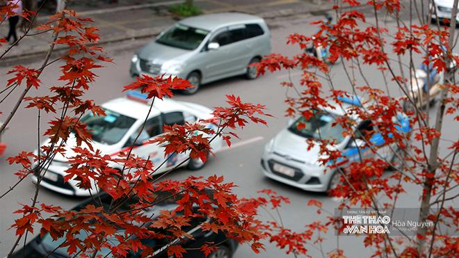 Ngắm hàng phong lá đỏ 'đốt cháy' phố Hà Nội