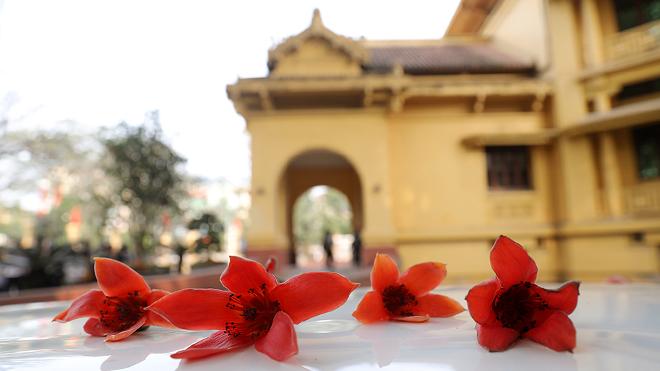 Chiêm ngưỡng hoa gạo nở sáng rực cả góc trời Thủ đô